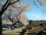 富士霊園1