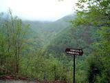 西沢渓谷森林