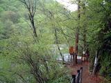 西沢渓谷森林道