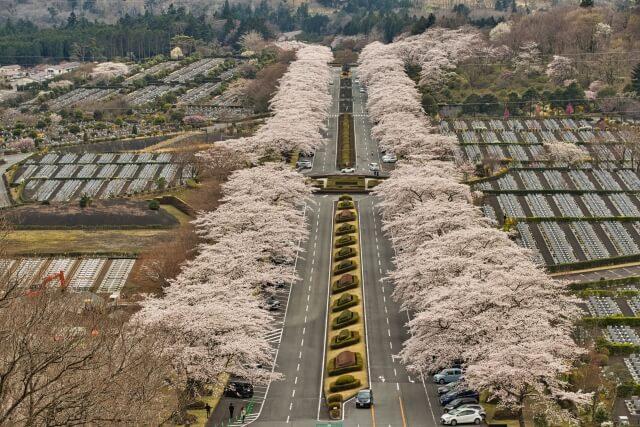 富士霊園全景