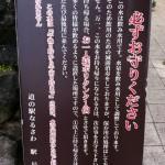 IMG_0261_1