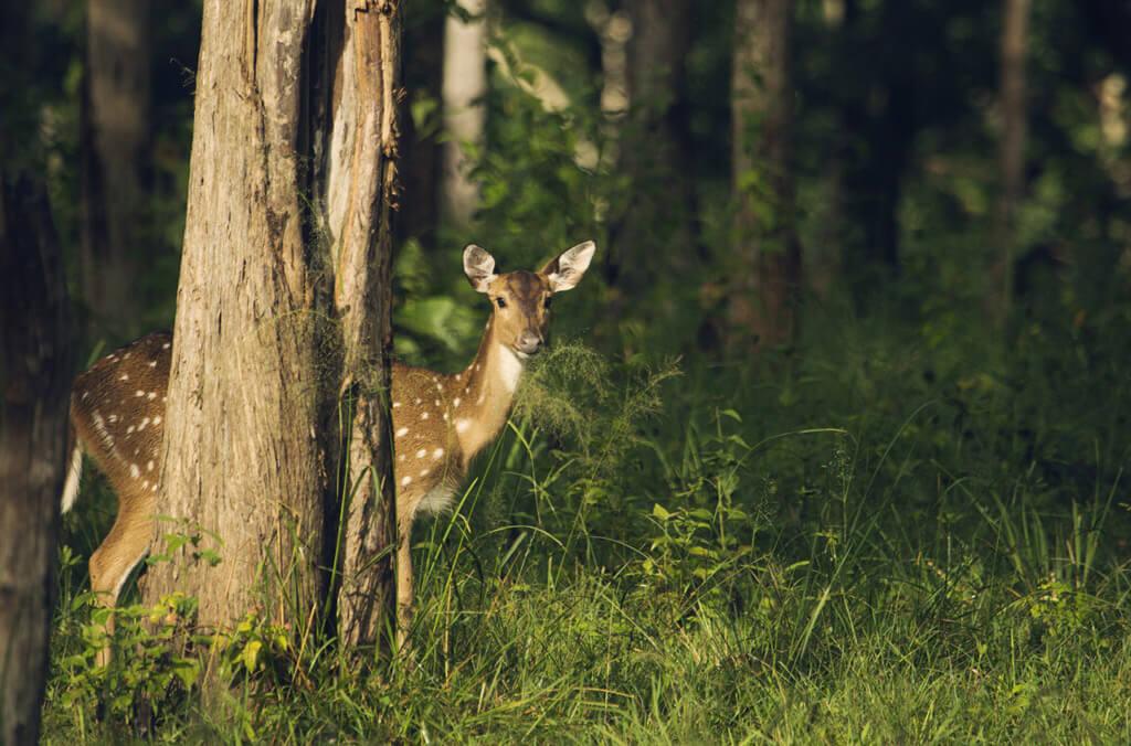 鹿が道路に飛び出すと危険